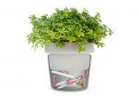 NAM-00065-plant-pot-tidy-split-with-herbs-on-white