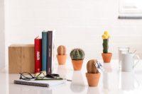 NAM-00086-cork-cactus-life-03